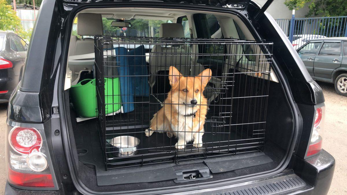 Собачья клетка для машины