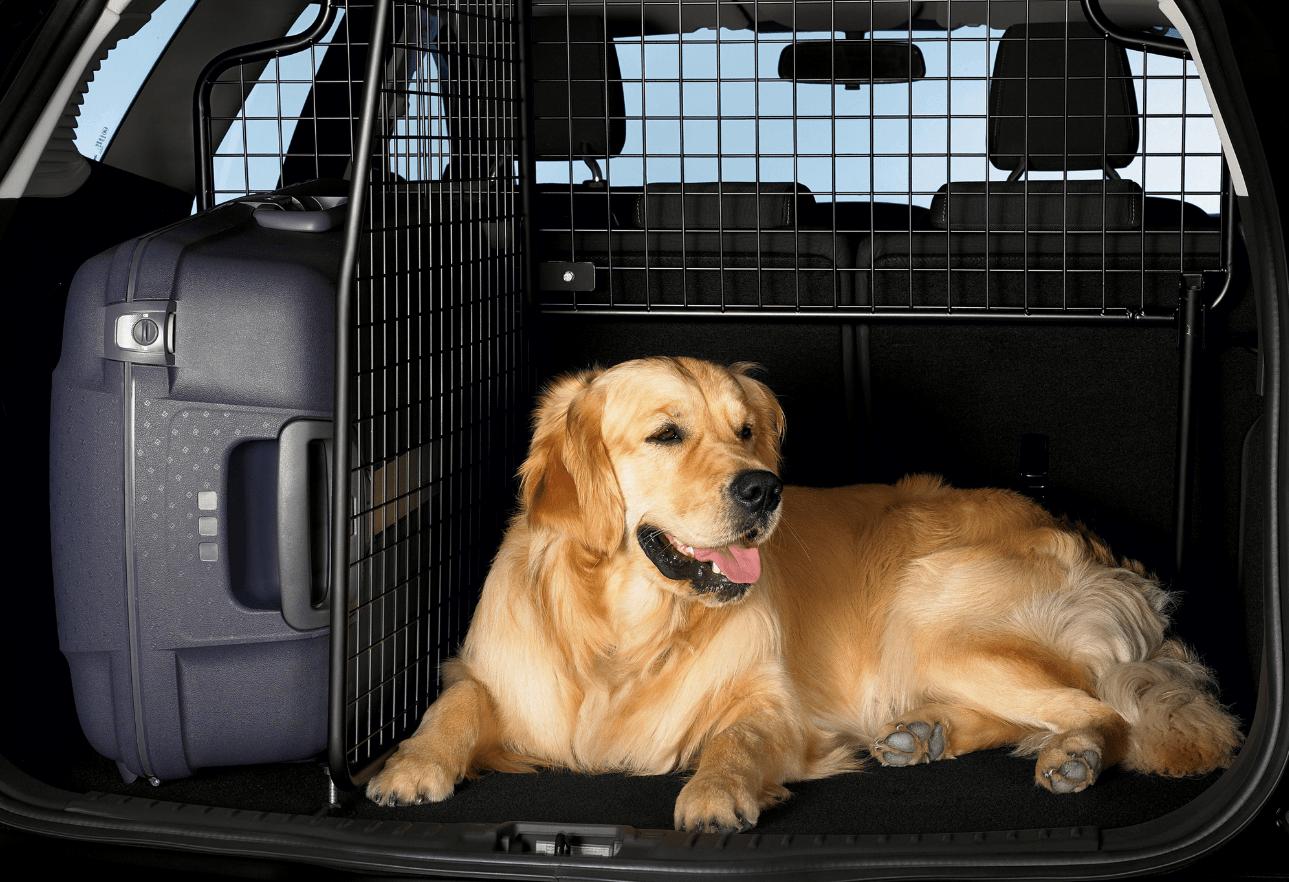 Выбор решетки для собак
