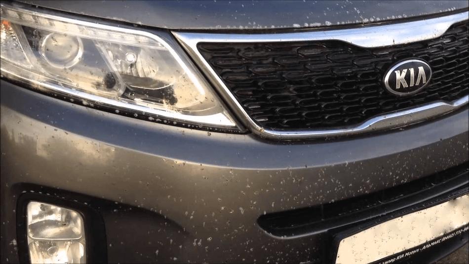 мухи на бампере автомобиля